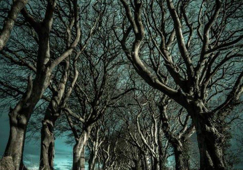 Dark Hedges (Ballymoney, Irlanda do Norte)