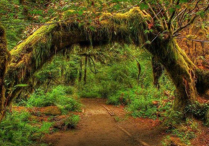 Floresta Tropical de Hoh (Washington, EUA)
