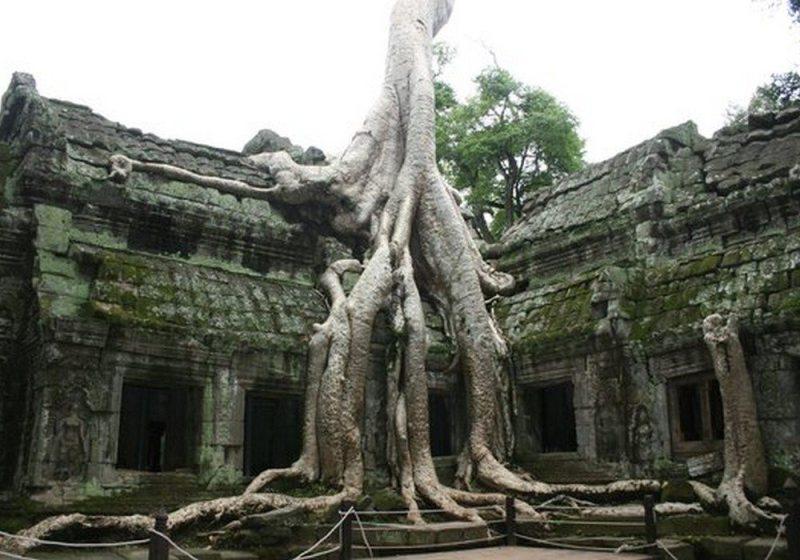 Ta Prohm (Siem Reap, Camboja)