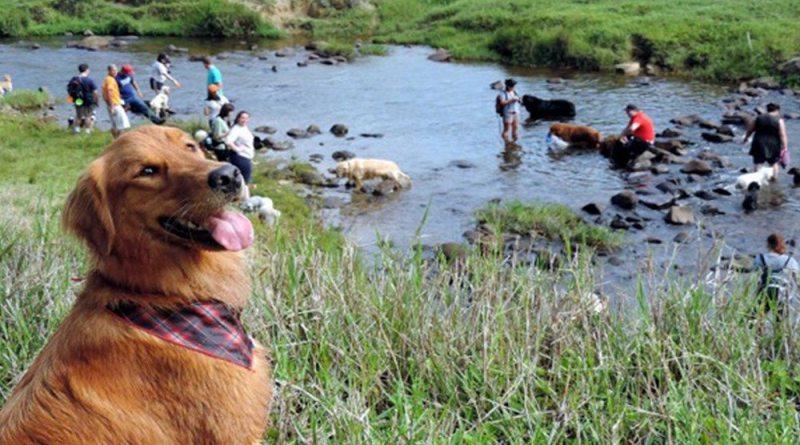 Cidade do interior de São Paulo terá trekking para cachorros