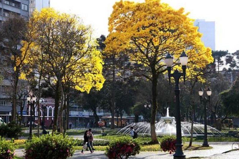 Curitiba (PR)