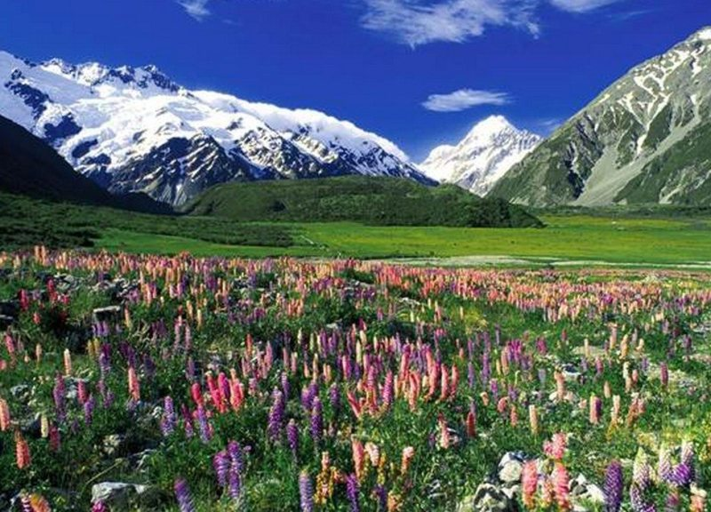 Nova Zelândia (Oceania)