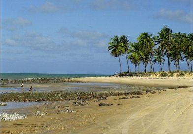 Paraíso Em Maracajaú Tem Mergulho Perto De Natal