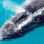 Observação Das Baleias Atrai Turistas Para A Costa Baiana