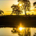 Tudo O Que Você Precisa Saber Antes De Visitar O Pantanal