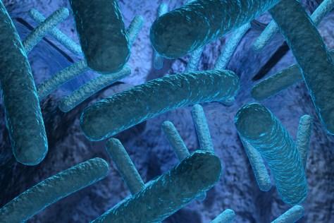 A bactéria Christensenellaceae protege do aumento de peso