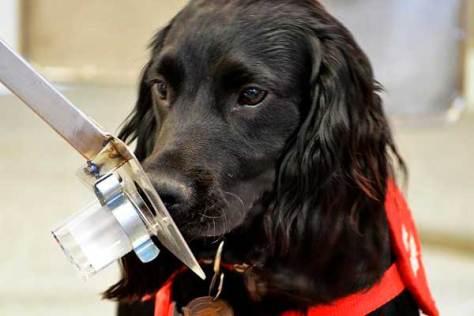 ter um cão melhorsaude.org