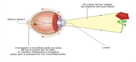 Olhos: Funcionamento_do_olho_humano melhorsaude.org melhor blog de saude
