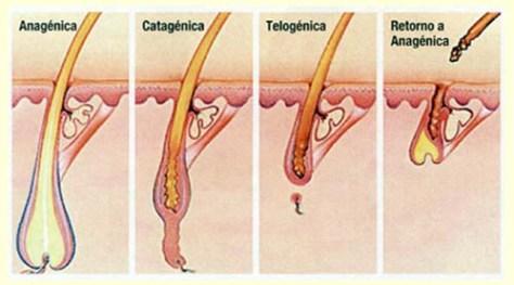 Alopécia ou calvície melhorsaude-org melhor blog de saude