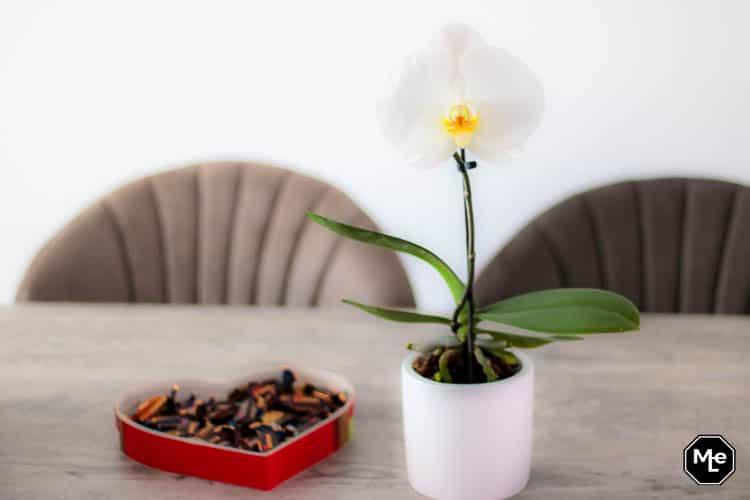 Het voorjaar in huis met een orchidee