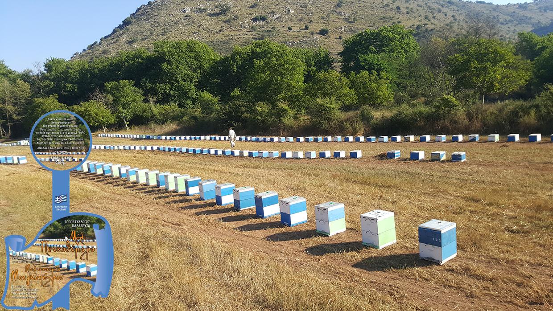 Μέλισσοκομία Μουγκοπέτρος