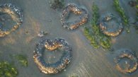 heart anemone