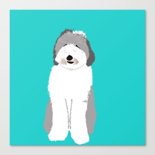 Lucy The Sheepadoodle Canvas Print by Melinda Todd