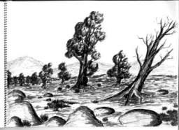 lincoln.a.ward.bush