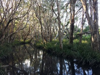 Black Rock Swamp