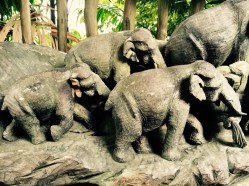 at singapore zoo