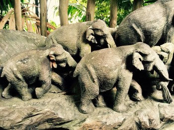 at singapore zoo