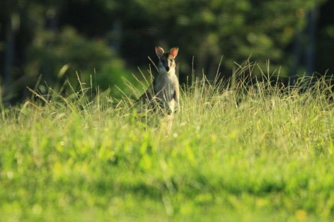 afternoon sun filtering through the long grass onto this little cutie ... 9/11/2011