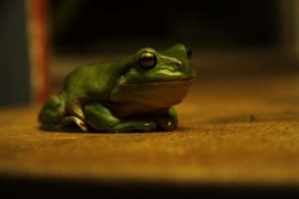 this little cutie was on the table outside last night. Love the colours in the amazing eyes ... 5/1/2102