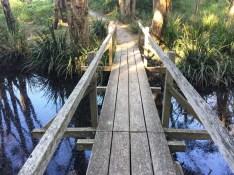 Water in the Black Rock Swamp