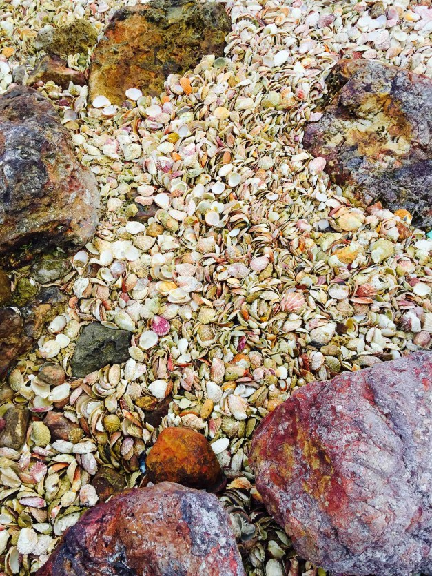 coloured scallop shells of asluman