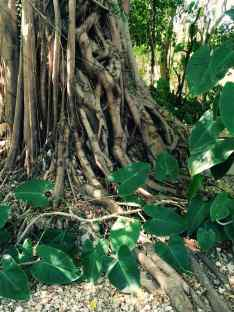 twisted vine a place of peace