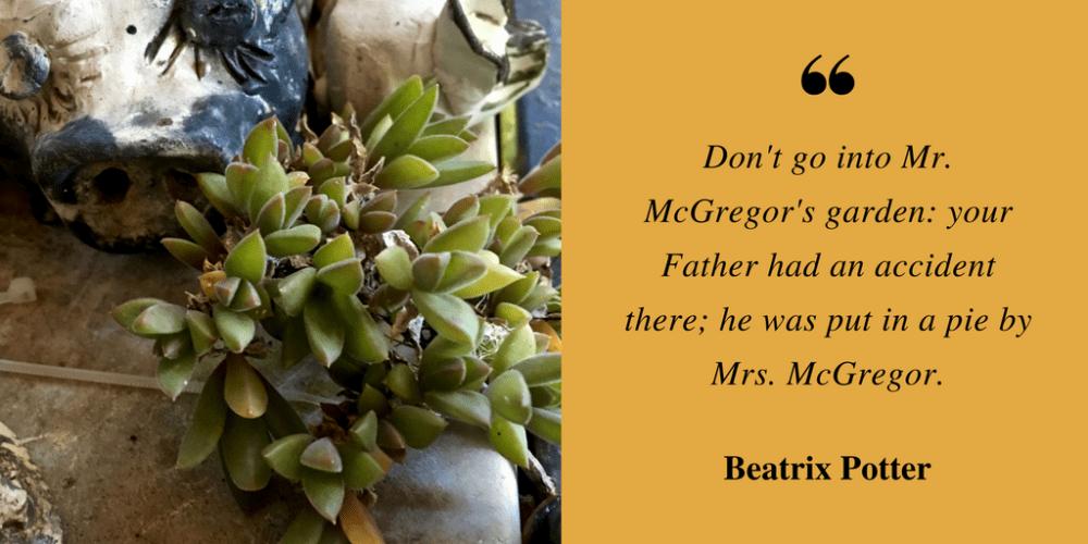 don't go into mr mcgregor's garden-2