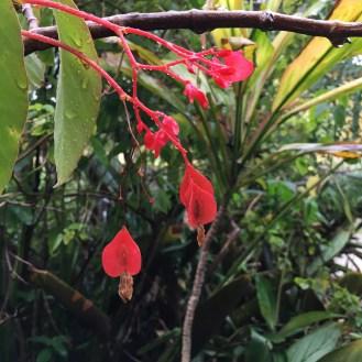 rain-on-red-flowers