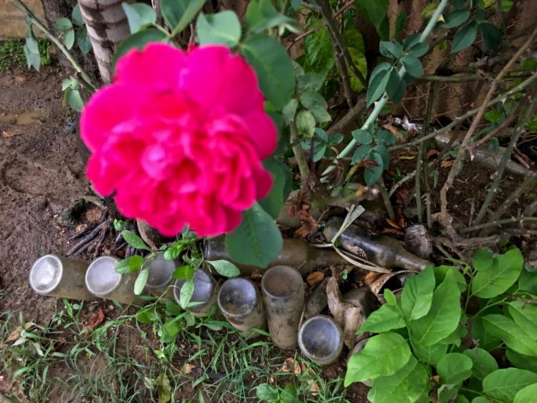 muddy garden filled with old bottles and a pink rose
