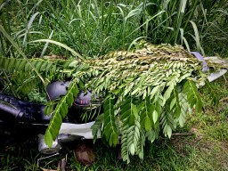 motorbike covered in leaves to protect from summer heat
