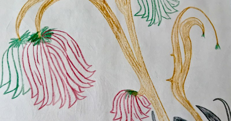 hand drawn strange fictitious flowers