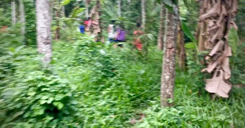 blurred photo of children walking along a bush trail