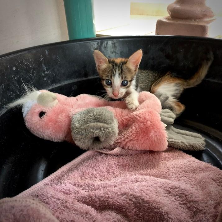 kitten with a toy bird