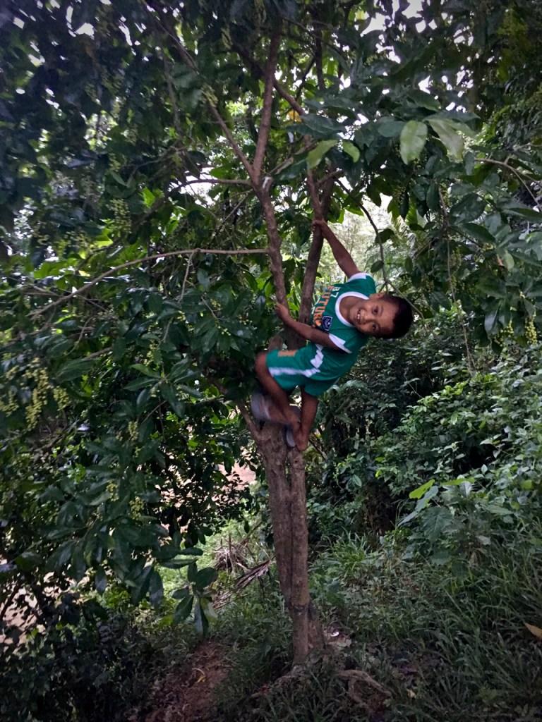 Filipino boy climbing a treet