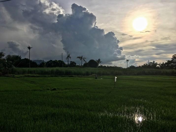 man spraying rice late afternoon