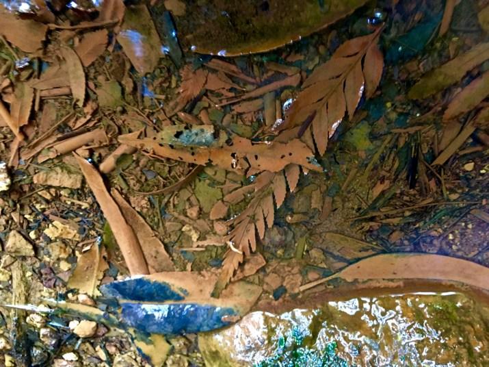 dead leaves in water