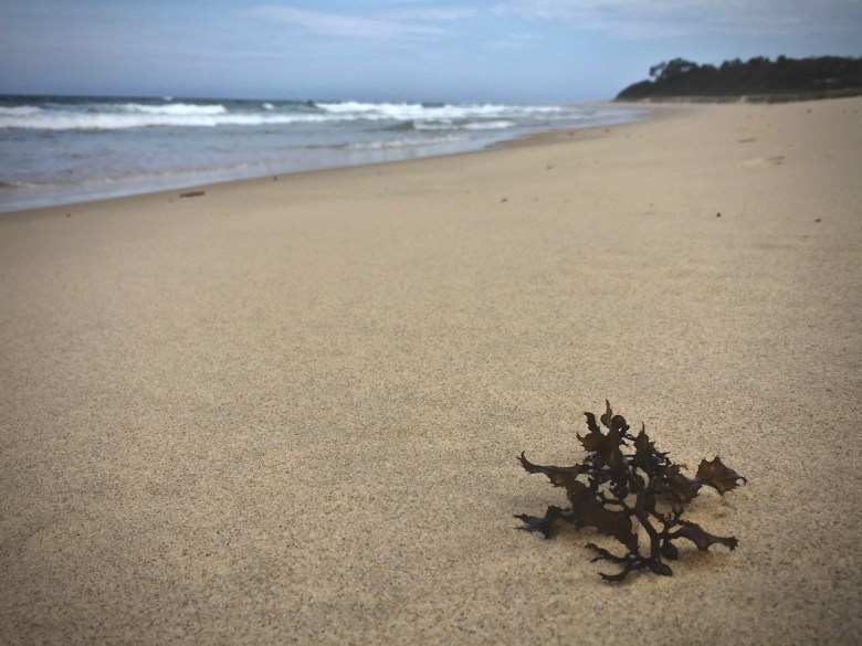 lone piece of seaweed on the beach