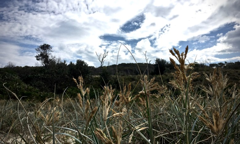 dead grasses and leafy dunelands