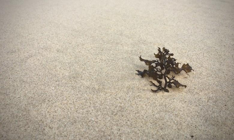 seaweed on the sand