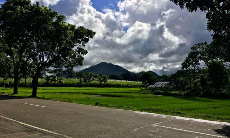 mountain overlooking rice fields
