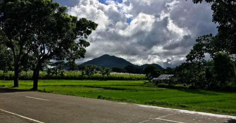 mountain overlooking rice fields