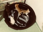 kittens in a washtub