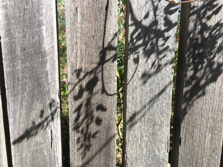 shadows on the fence