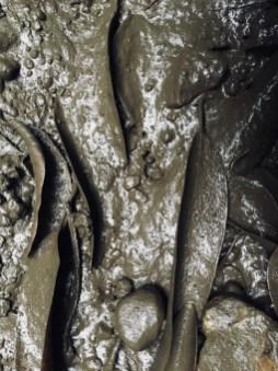muddy leaf