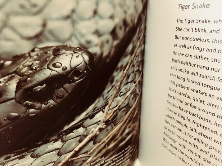 tiger snake - faunaverse tasmania