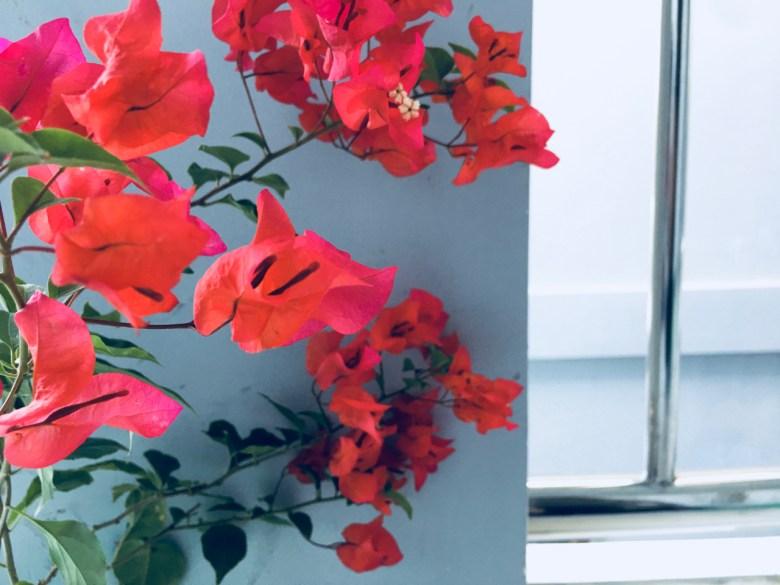 red balcony flowers