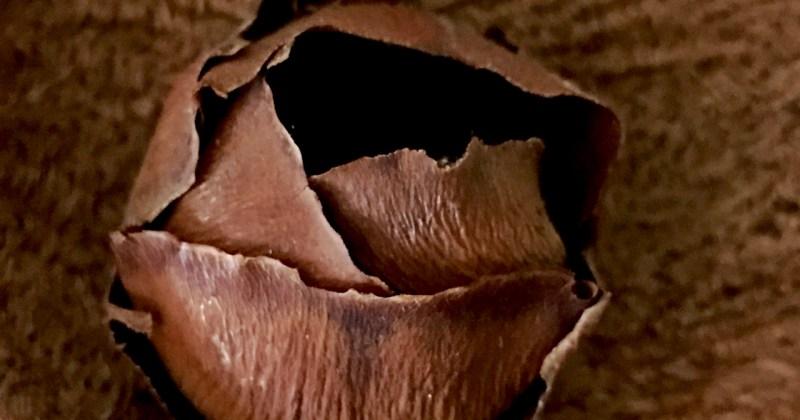 inside a tree seed