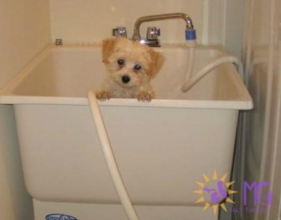 puppy in bath tub diary of a dog