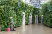 "This has to one of my favorite parts of the Conservatories - the ""living wall"" public bathroom corridor! It's apparently the largest one of its kind in North America."