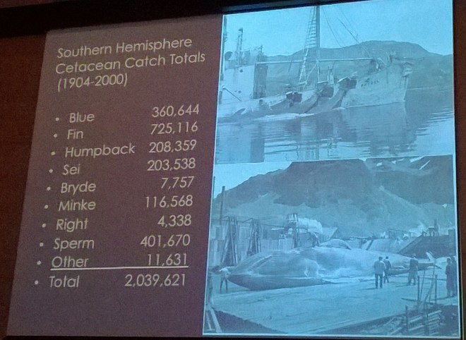 Over 2 million whales killed from 1904-2000. Photo by M.C.
